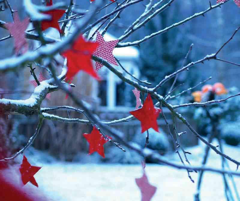 різдвяні зірки на деревах
